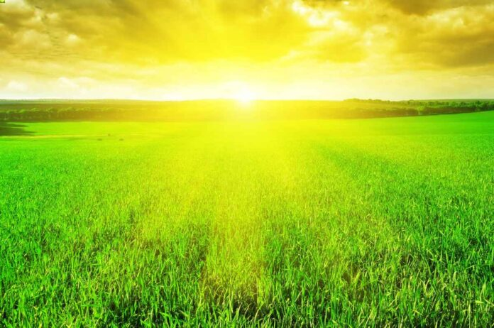 Brilliant yellow sun rising over bright green fields filled with crops.