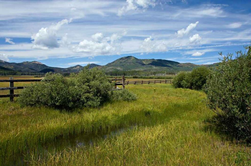 Summer meadow with irrigation ditch, long green grass, bushes, a wooden fence and mountains in the background. Blue sky with wispy white clouds.