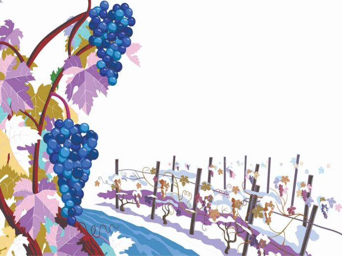 Illustration of dark blue-purple grapes and grapevines covered in snow.