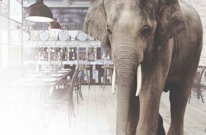 Photo of wrinkled grey elephant with white tusks in a white and grey restaurant dining room with a long community table set with eight place settings.