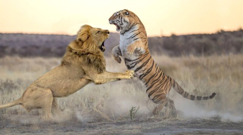 What should man learn from tiger and lion?