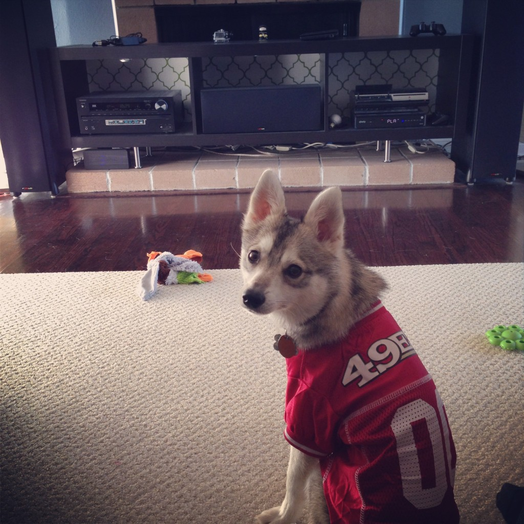 This is Kodi our Alaskan Klee Kai showing his NINER spirit  Photo: Lily Lim