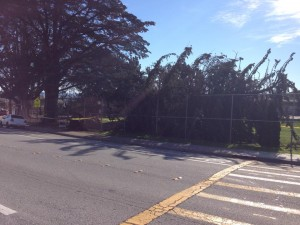 Peepers Arce shared this photo of a tree down at Paradise Valley Park