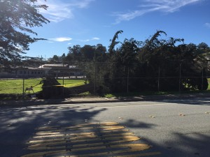 Kim Harrison shares a photo of the tree down at Martin School.