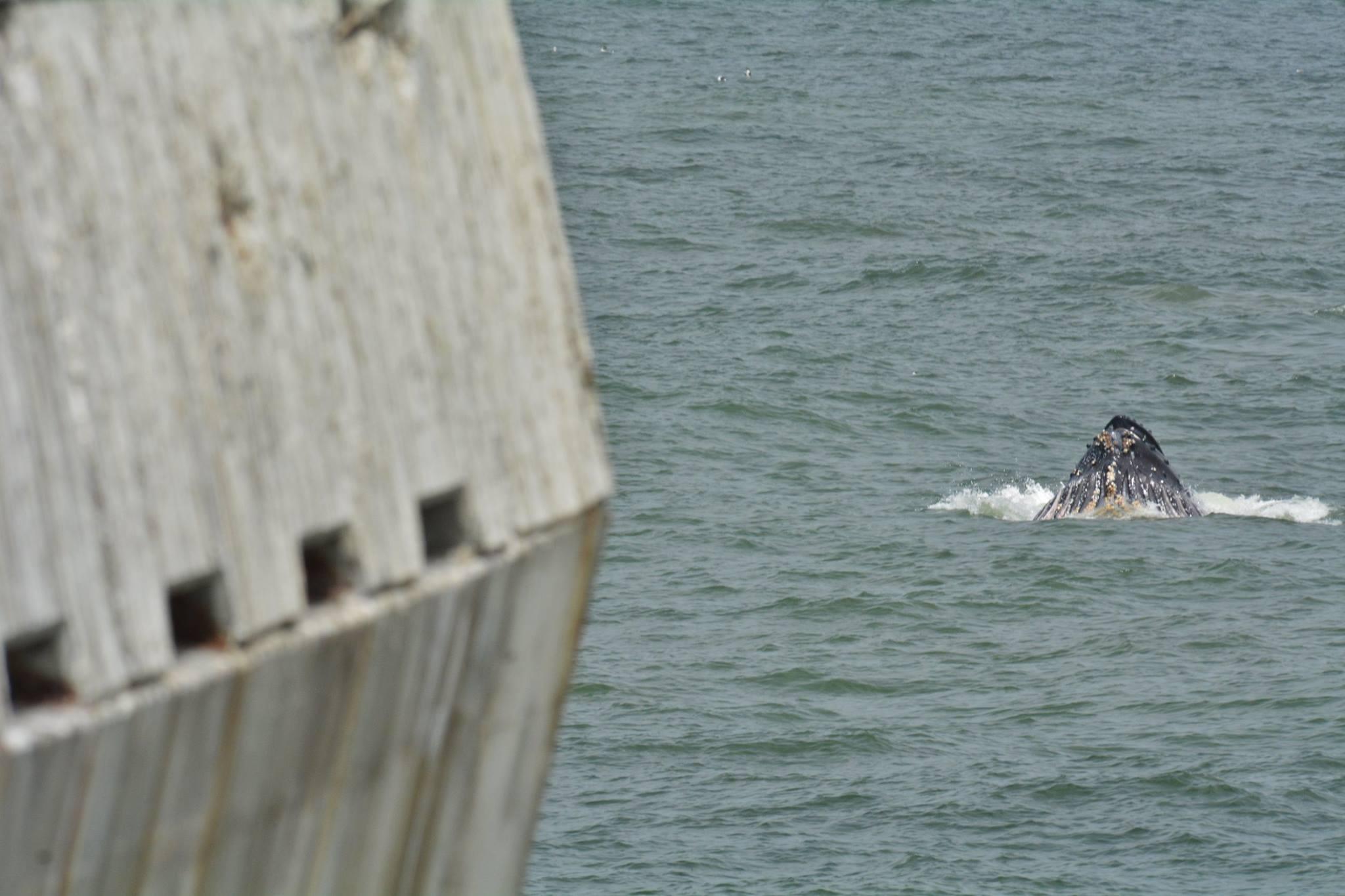 whalespierlabordayvinny9.3.2016