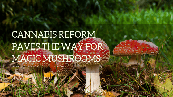 Clear710 Blog Cannabis Reform Paves the Way for Magic Mushrooms