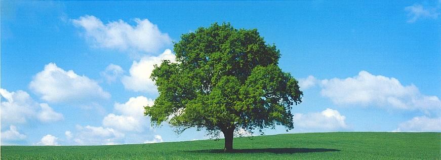 cri-greentree