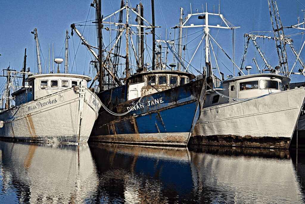 Old purse seiners rafted to the commercial wharf at Swan Quarter, North Carolina.