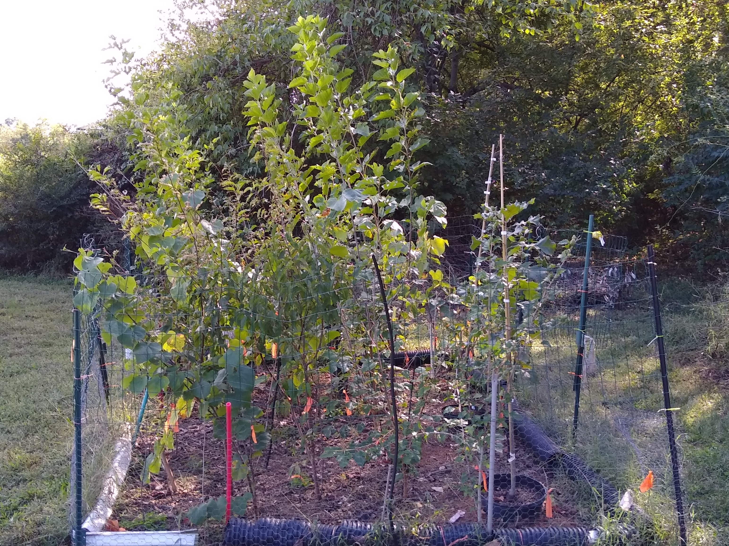 Small Trees in Tree Garden 5-1/2  months later, facing West