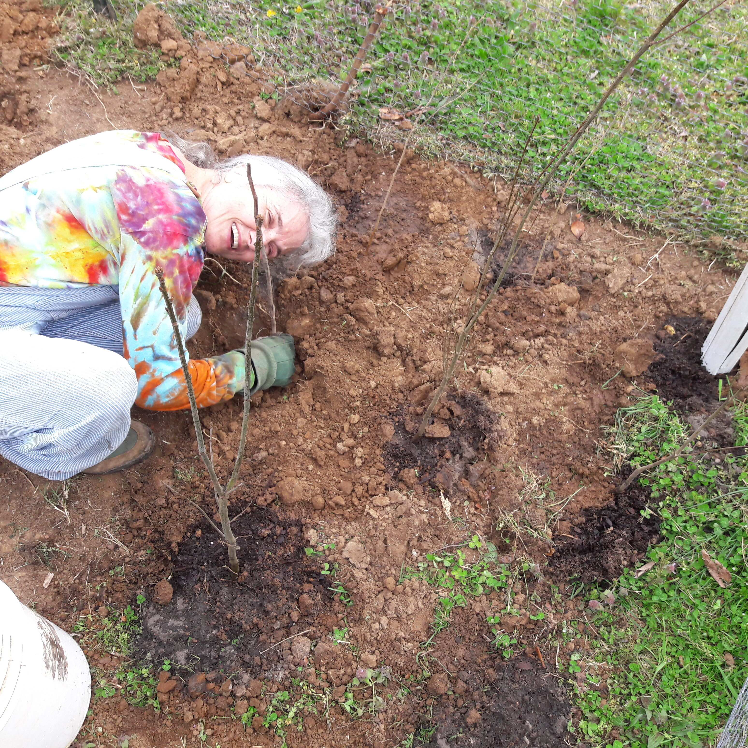 Digging and Planting in Tree Garden