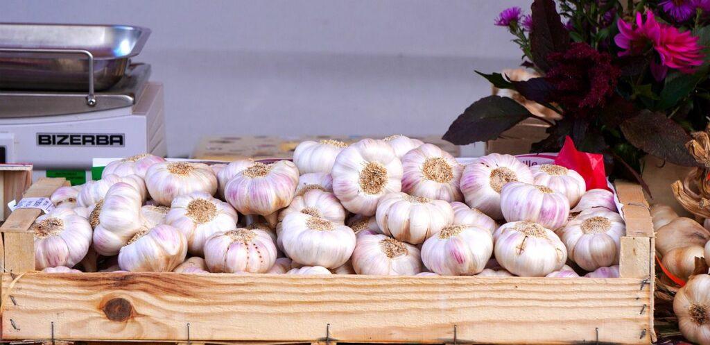 garlic nutrition