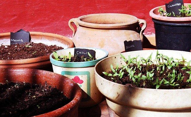 Secret soil recipe for your home-grown plants