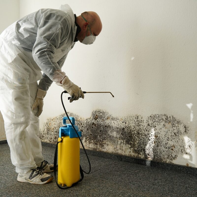 How Much Do Services for Mold Removal Tampa, Cost?