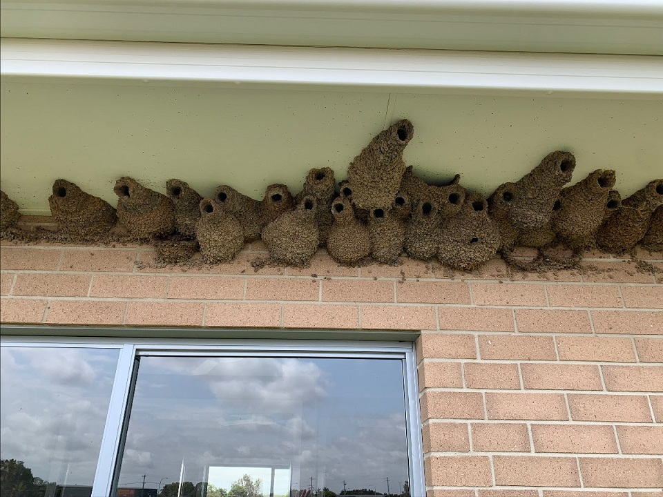 We came across this multi-home project down in Ballina where some birds had set themselves up rather comfortably.  This was one part of the job that couldn't be completed as there were birds flying in and out of the nests.