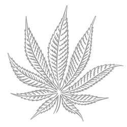 Hash Marijuana Hemp Museum