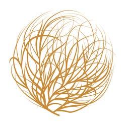Tumbleweed – Parachute