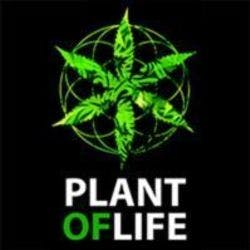 Plant of Life Head Shop (CBD Only)