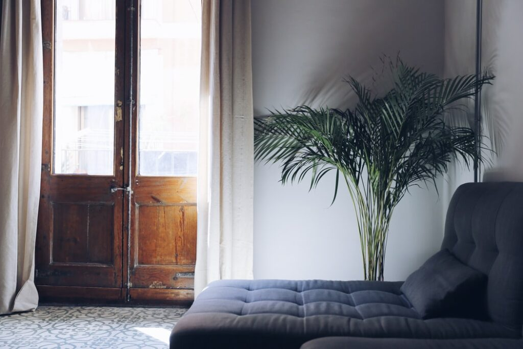 A plant in one corner makes the atmosphere peaceful