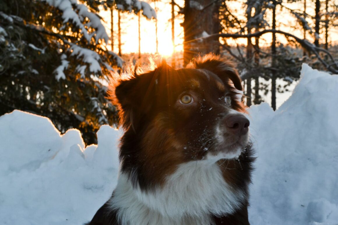 dog in the sun and snow