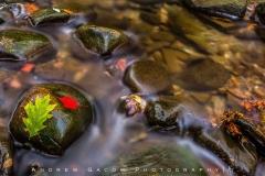 Autumn In the Brecksville Reservation