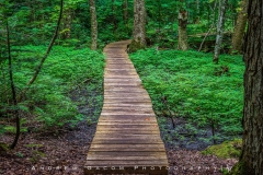 Michigan_Hike_Wooden_Bridge
