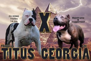 Probull's King Titus & S2C's Georgia