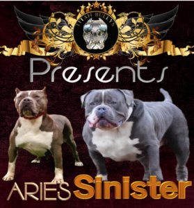 Aries X Sinister