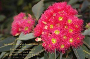 Psalms 139 flower