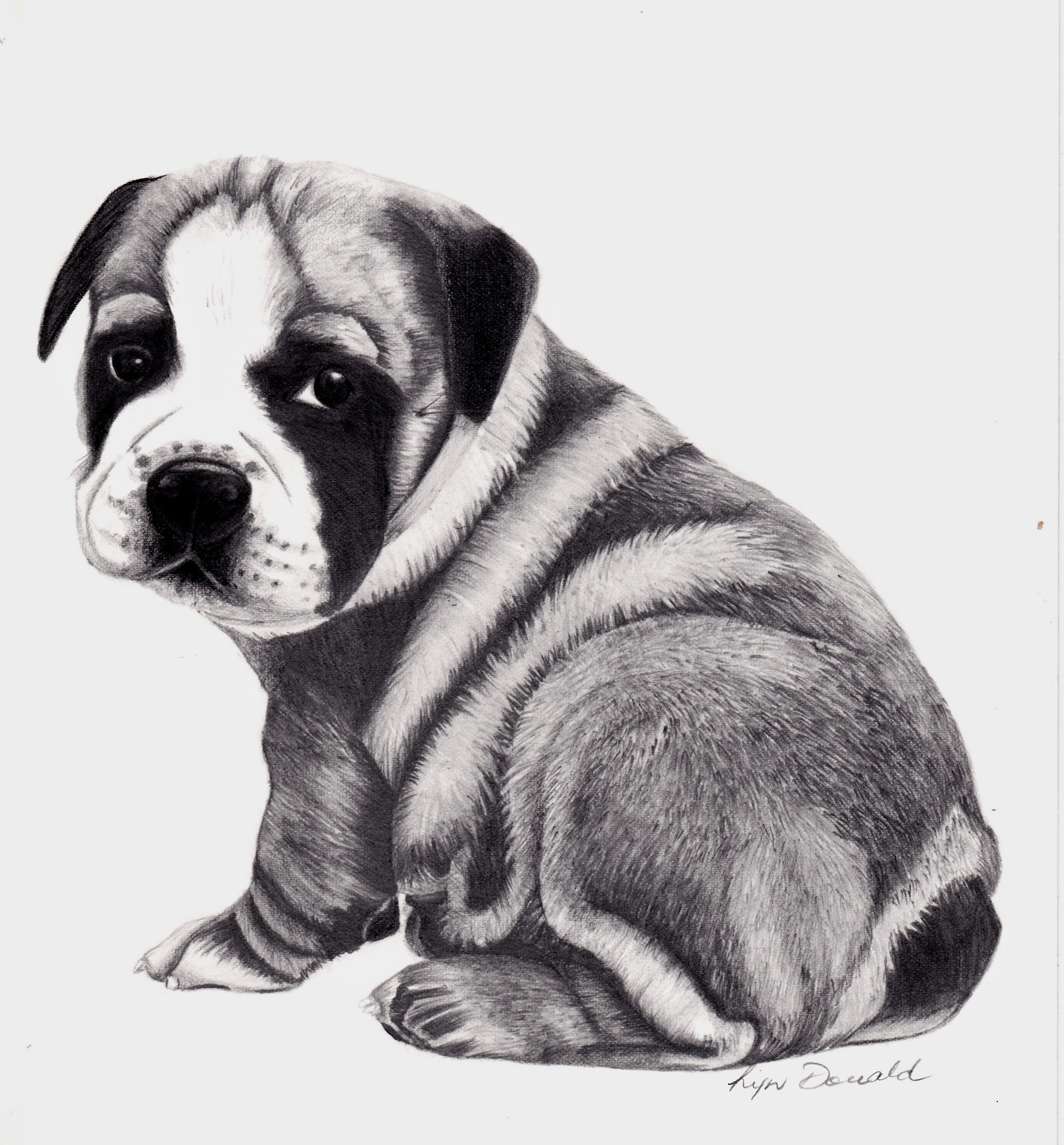 Baby Winston-Graphite