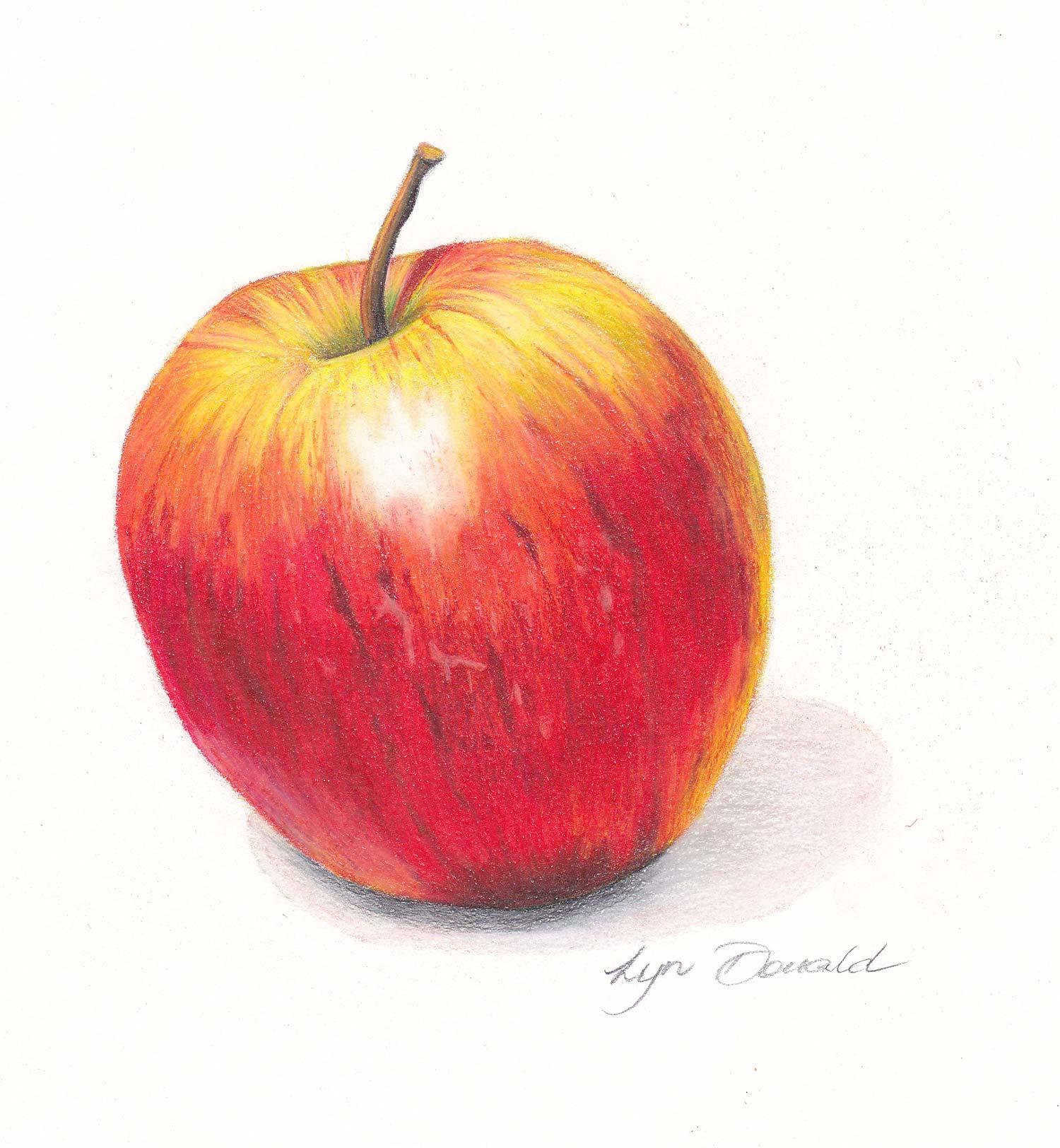 Coloured Pencil Course Sunshine Coast - Apple