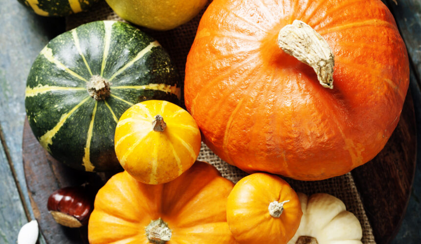 carving pumpkins,pie pumpkins, decorating gourds and squash Available!