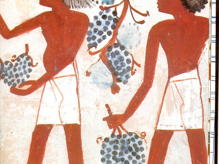 WHY ANCIENT EGYPTIANS DIDN'T DRINK WINE