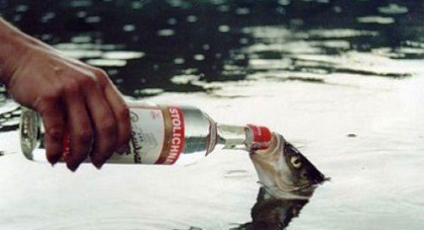 DRINKING WITH FISH