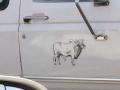 Bull sticker (3).jpg