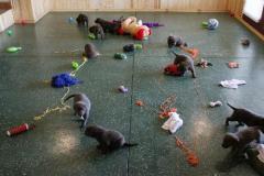 1_Puppy_play-509x307