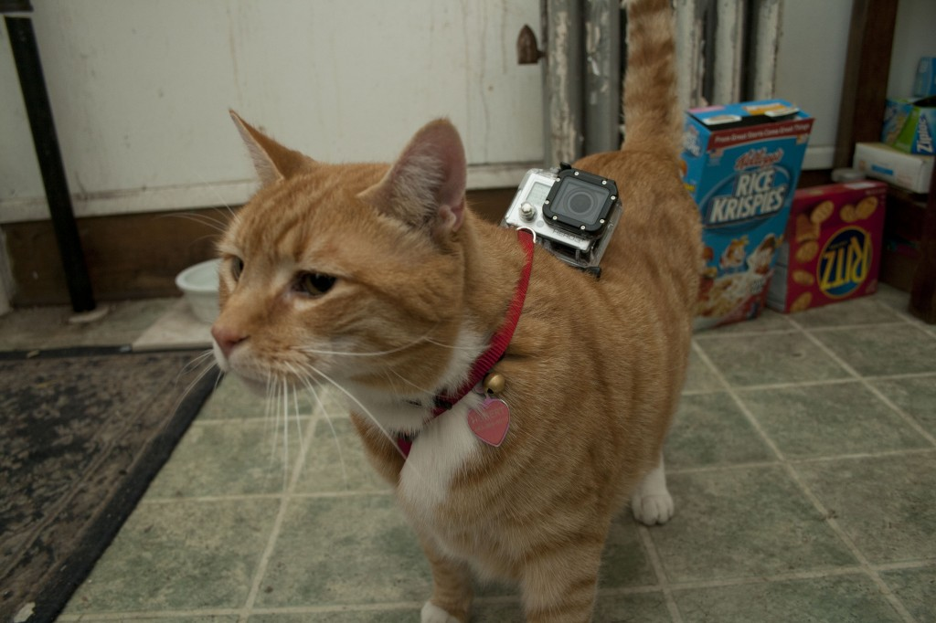 How to Make Your Cat a Cinematographer • What Weekly Magazine