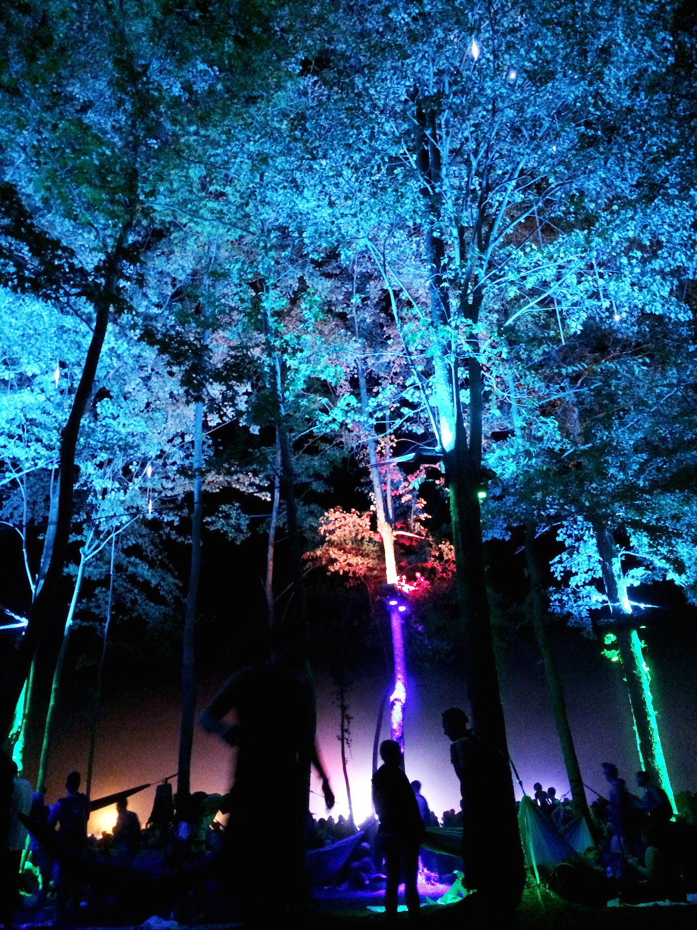 Lights-Firefly