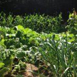 Abundant Veggies