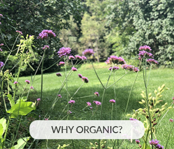 Berkshire Greenscapes | Why Choose Organic Lawncare