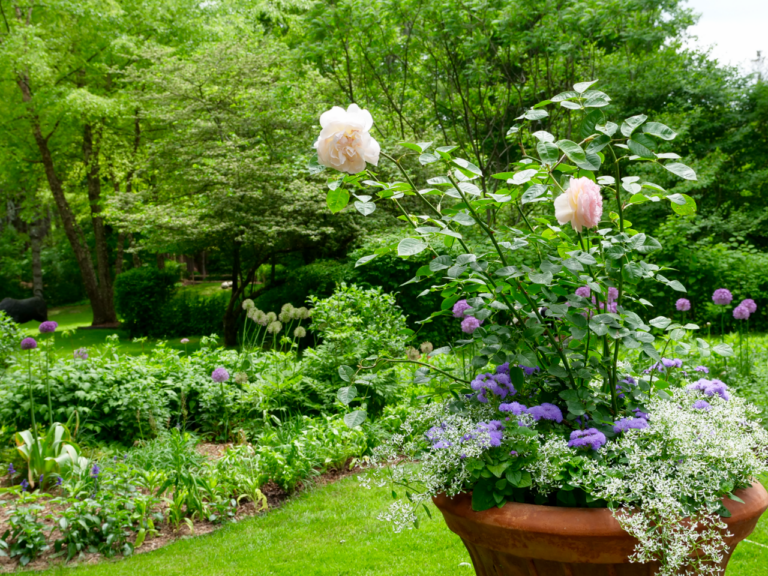 Container Garden Featuring Roses