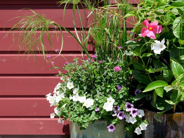 Mixed Texture Container Garden