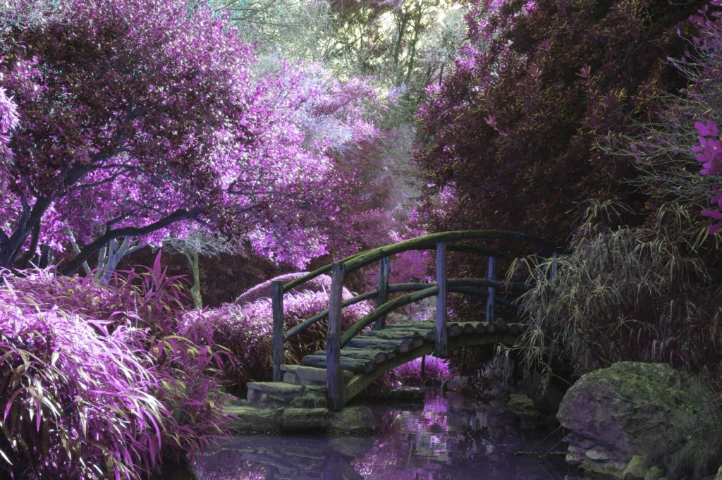 Blog | Page 2 of 8 | Mystical Garden Designs on mythical garden designs, mystical waterfalls, mystical landscape, hypnotic garden designs, mystical roses, mystical fairy gardens, art garden designs, secret garden designs, simple garden designs, native american garden designs, modern garden designs, romantic garden designs, natural garden designs, celtic garden designs, inspiring garden designs, artistic garden designs, meditation garden designs, elegant garden designs, landscape garden designs, cosmic garden designs,