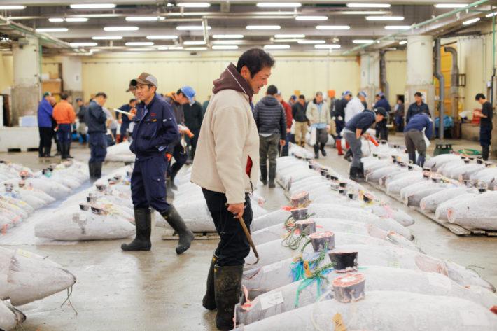 Tsukiji Fish Market in Tokyo. Man inspect fish before bidding begins.