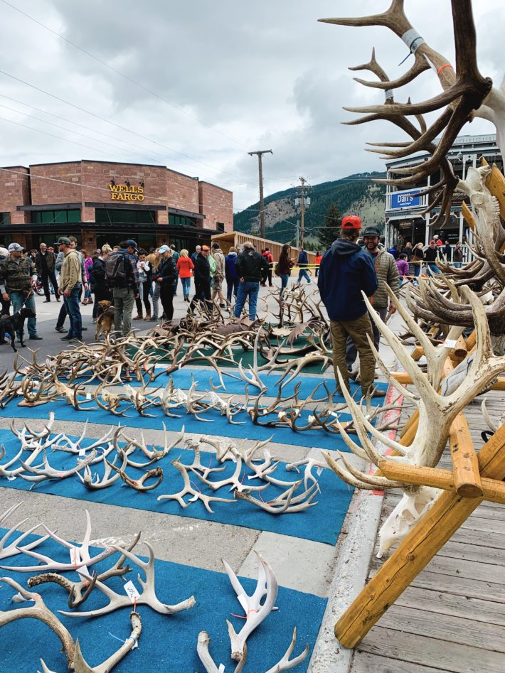 jackson hole elk antler auction