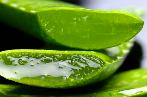 anti-aging Remedies - Aloe vera