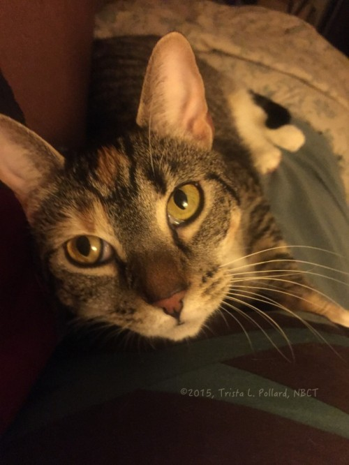 One Cat Household: Do I Really Need a Second Cat?