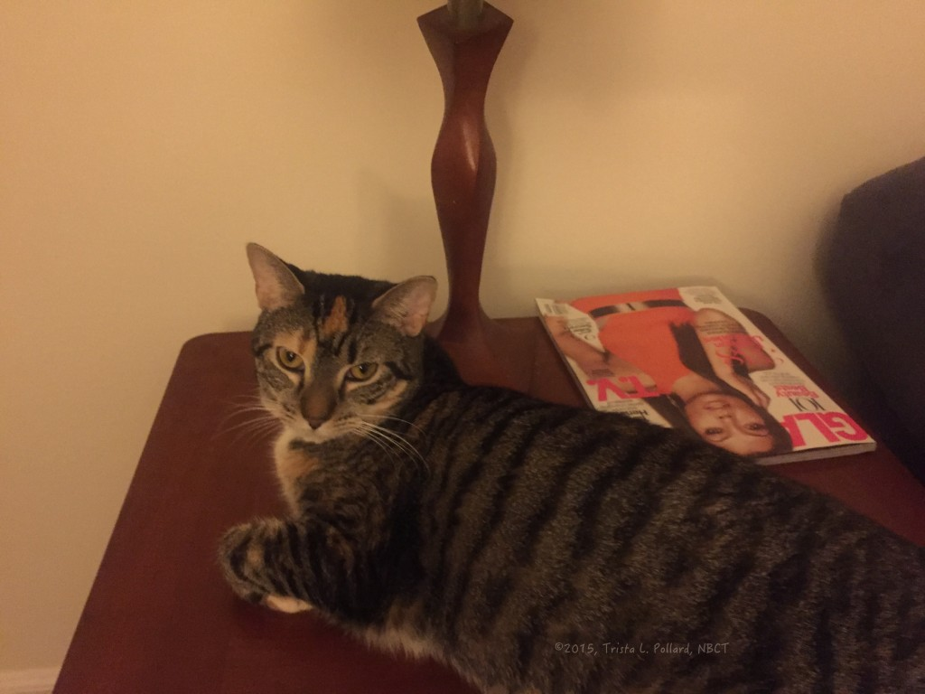 female cat relaxing on furniture