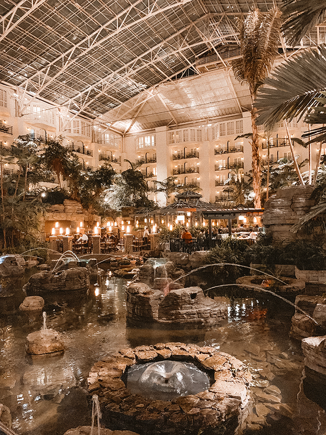 gaylord opryland - a cup of owl