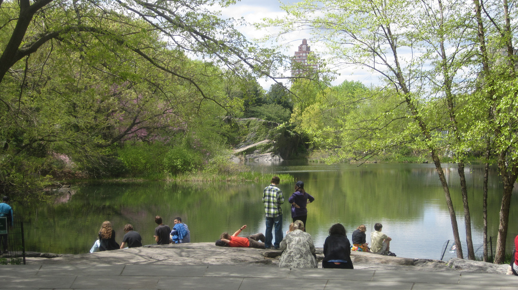 Teacher Field Trip: Exploring Turtle Pond and the Urban Ecologies of Central Park