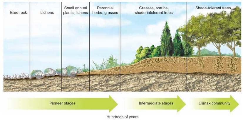 EcoSTEM Day: Using Succession to Teach the Dynamics of Ecosystem Change